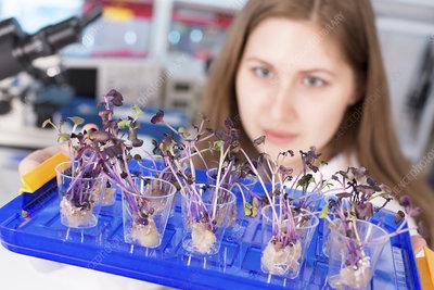 Student examining plants in lab