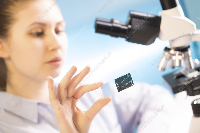 Student holding microscope slide in lab