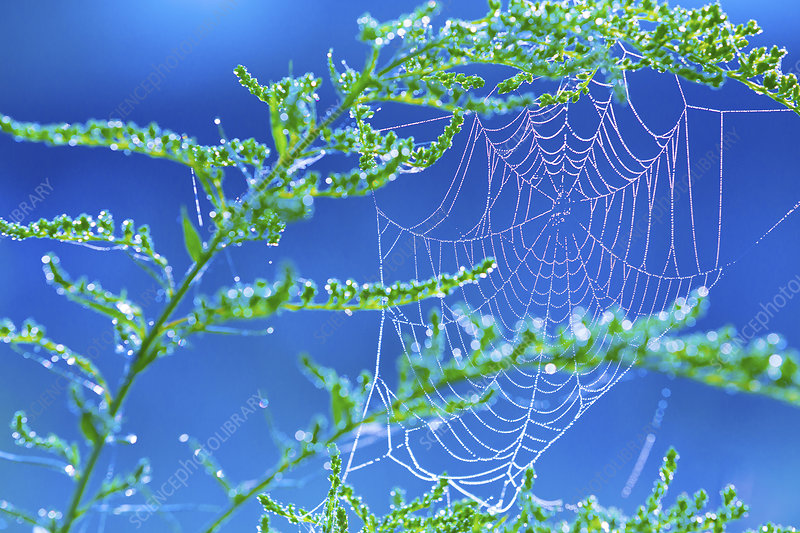 Spider's web on plants