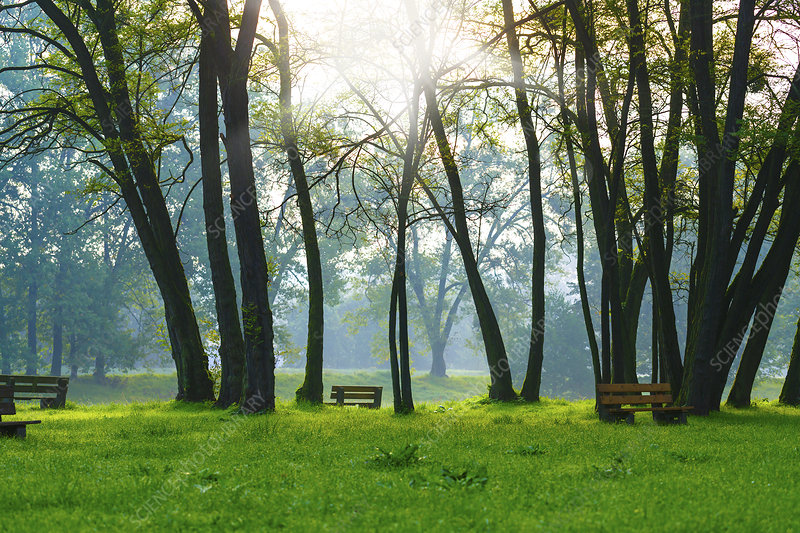 Benches and trees in the sunlight