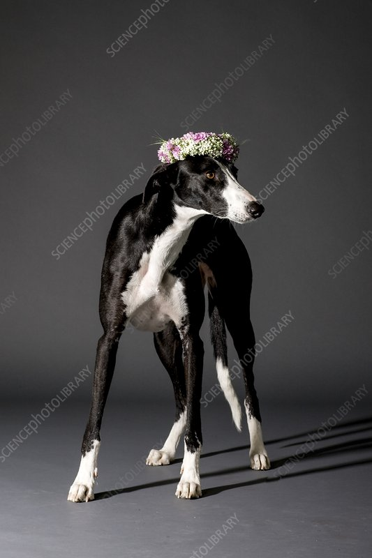 Dog and flower wreath