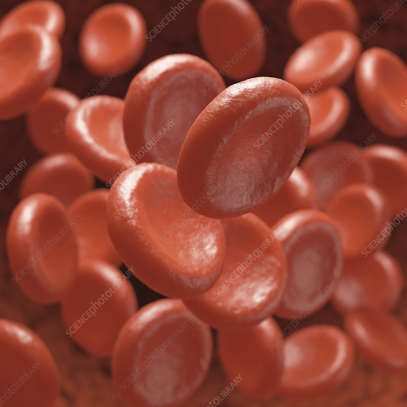 Red blood cells, illustration
