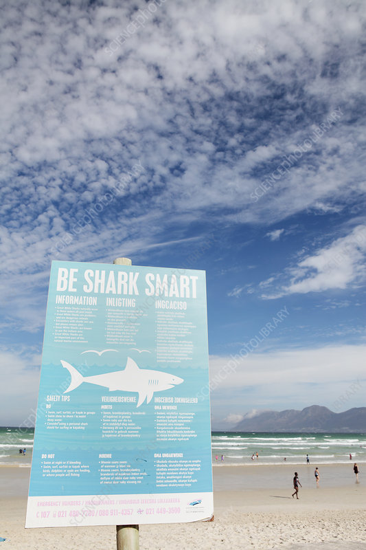 Shark attack warning sign