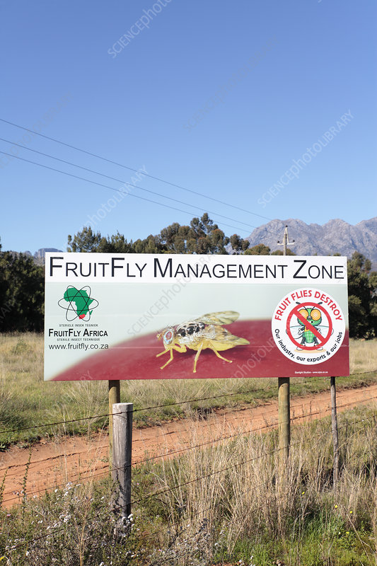 Fruit fly warning sign