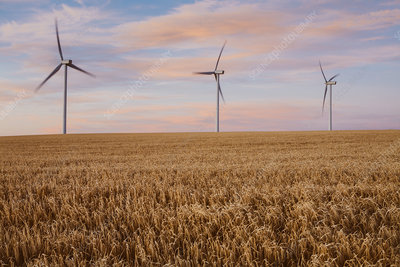 Wind turbines at dusk over field of wheat