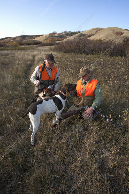 Two bird hunters with guns and spaniel