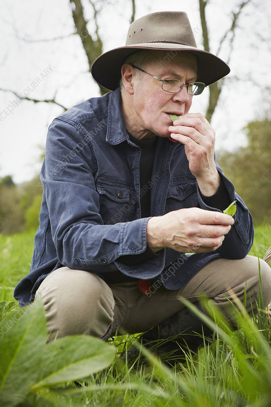 A man foraging for edible plants