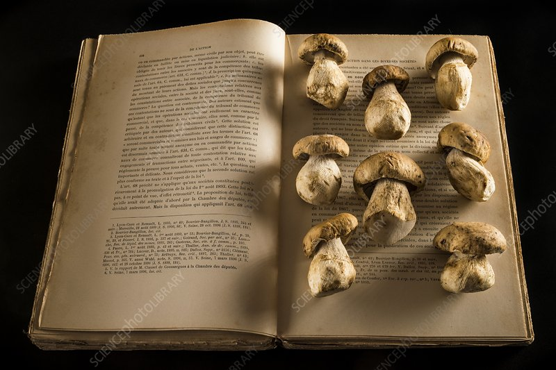 Ceps mushrooms on an open book