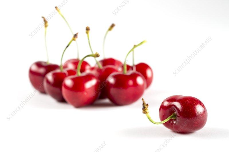 Red cherries, studio shot