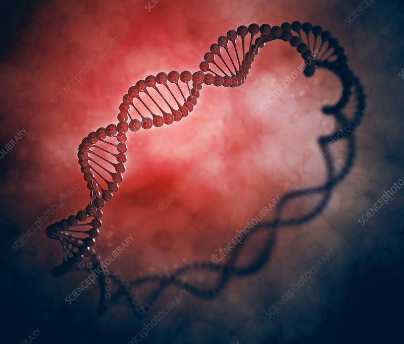 DNA strand molecular model, illustration