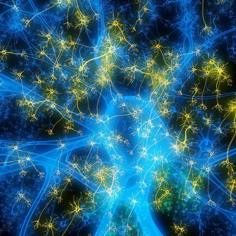 Neuron, illustration