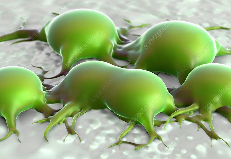 Fat cells, illustration