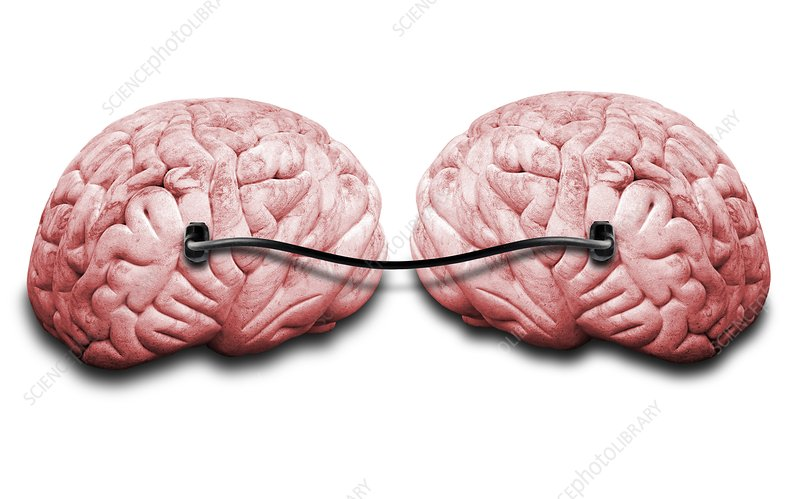 Two brains connected by a wire