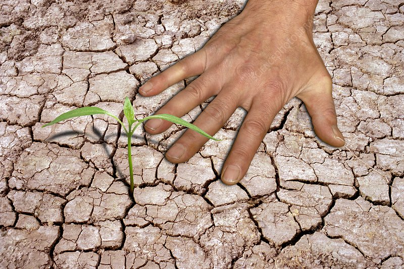 Seedling and hand on cracked earth