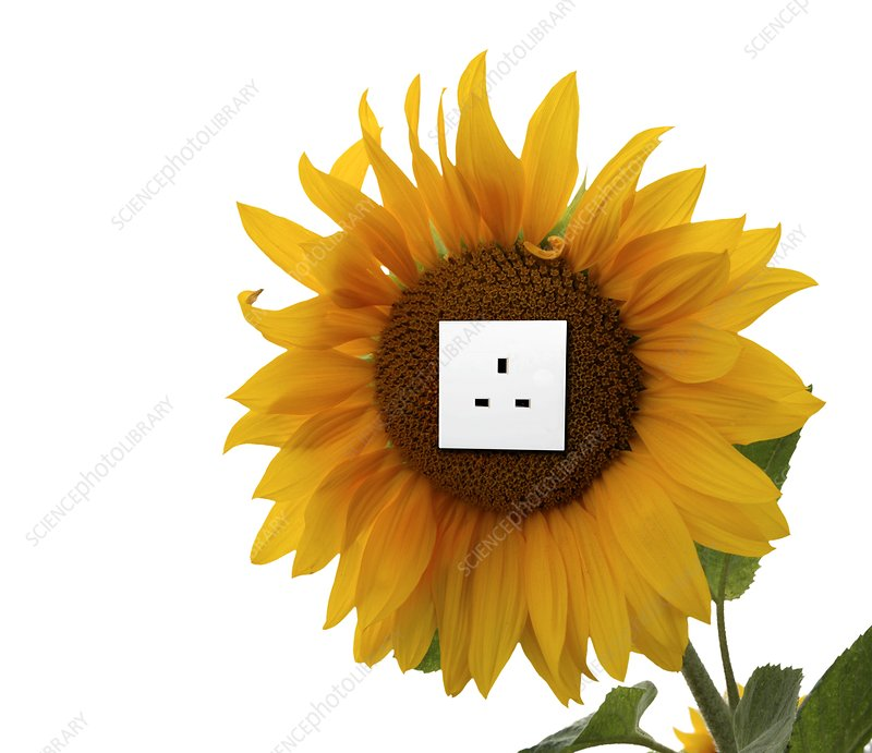 Sunflower with an electrical socket