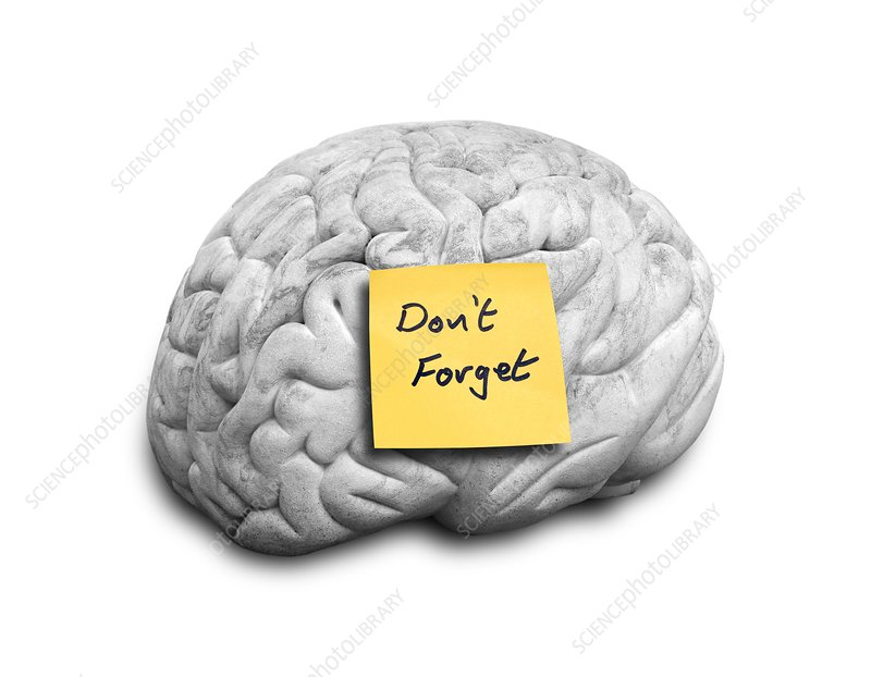 Human brain with an adhesive note