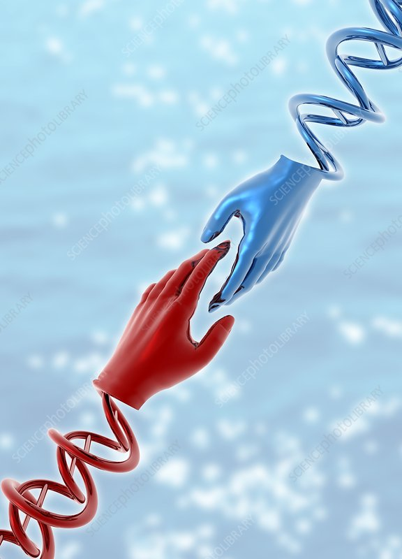 Hands with double helix, illustration