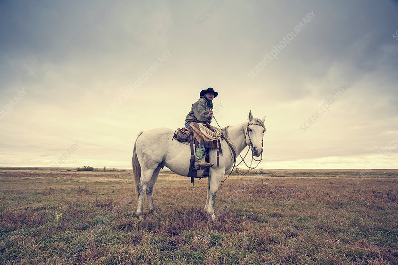 A working cowboy seated on a grey horse