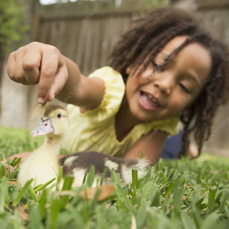 A young girl stroking a duckling