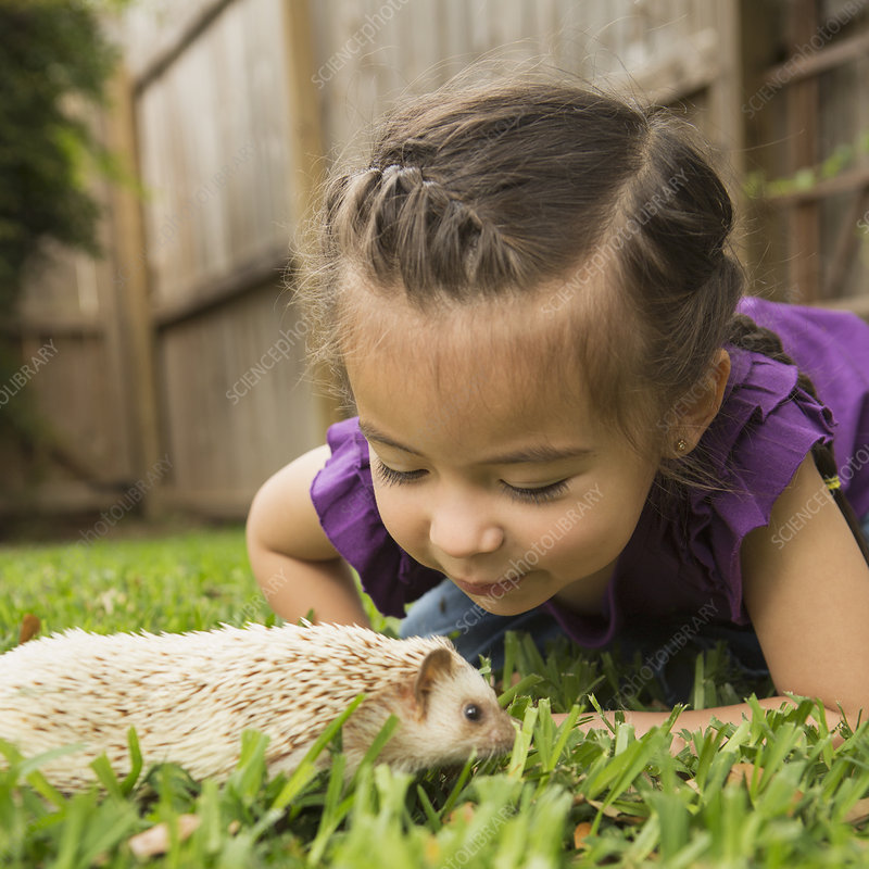 A young girl looking at a hedgehog