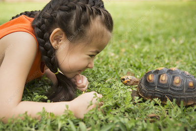 A girl looking at a tortoise