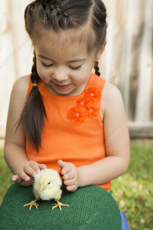 A child with a baby chick on her lap