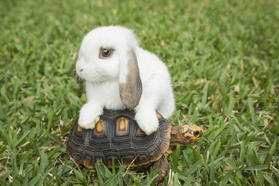 A small tortoise and a white rabbit