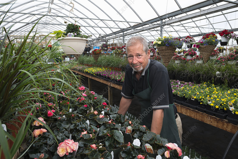 A man standing in a greenhouse