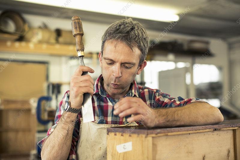 Antique furniture restorer holds a chisel