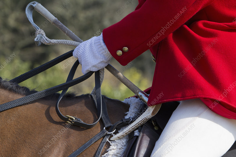 Master of Foxhounds in hunting pink