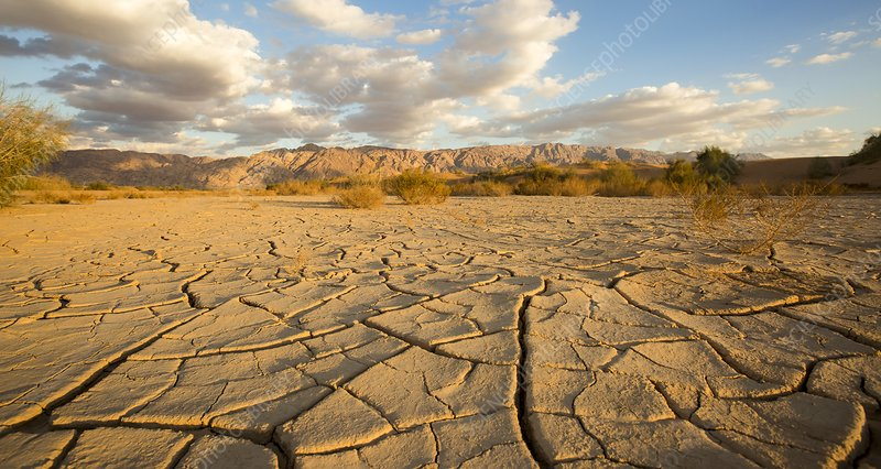 Parched ground in a desert