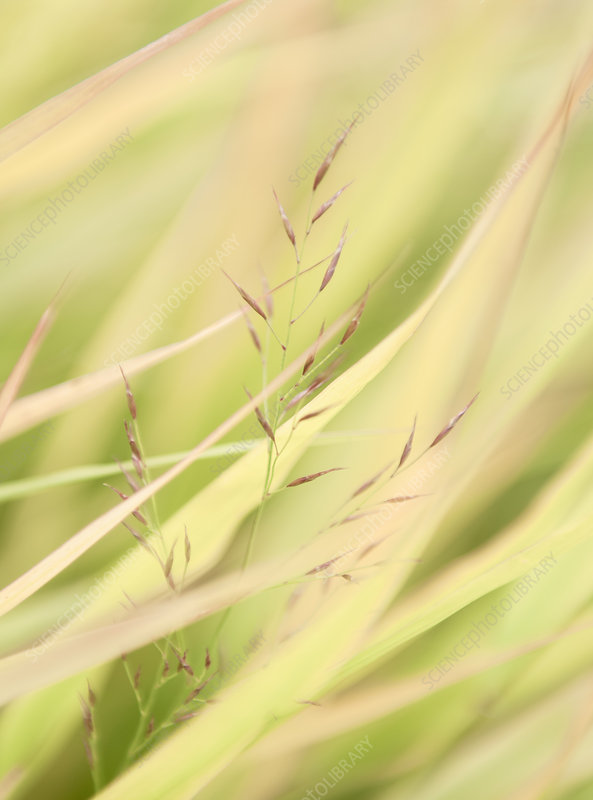 Close up detail of delicate long grasses