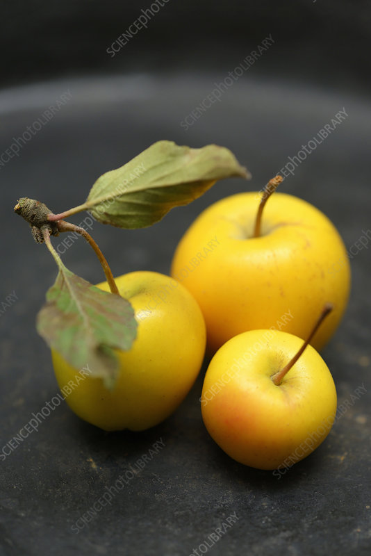 Yellow crab apples, close-up