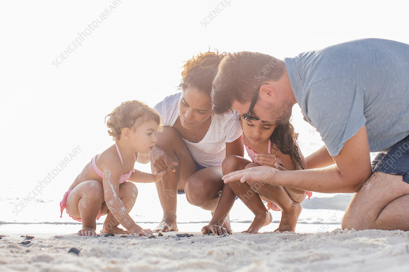 Family looking for seashells