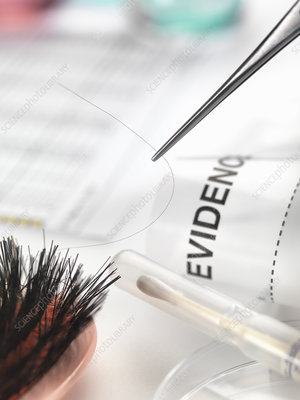 Hair sample collected from crime scene