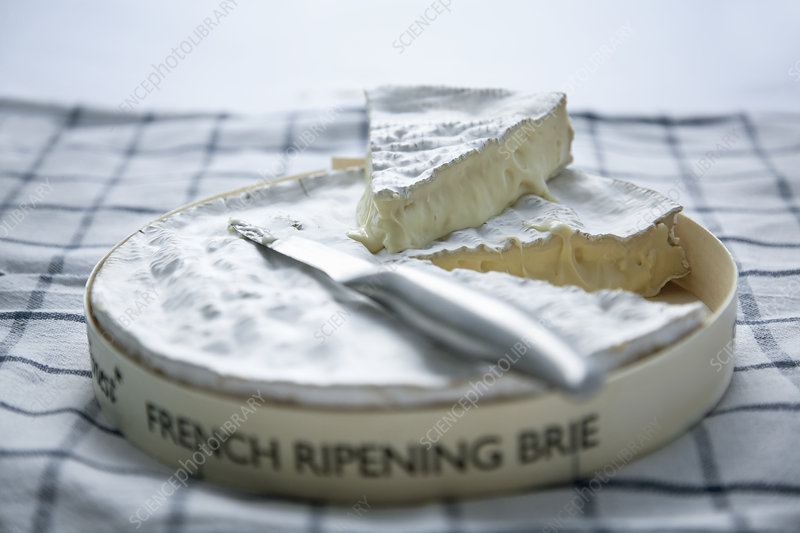 Brie and cheese knife