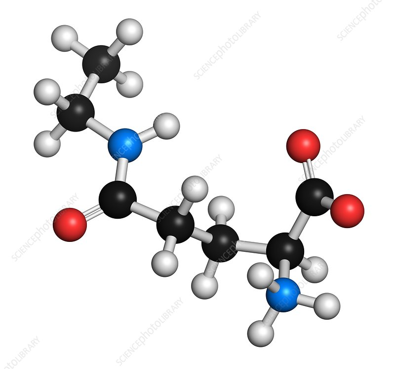 Theanine herbal molecule