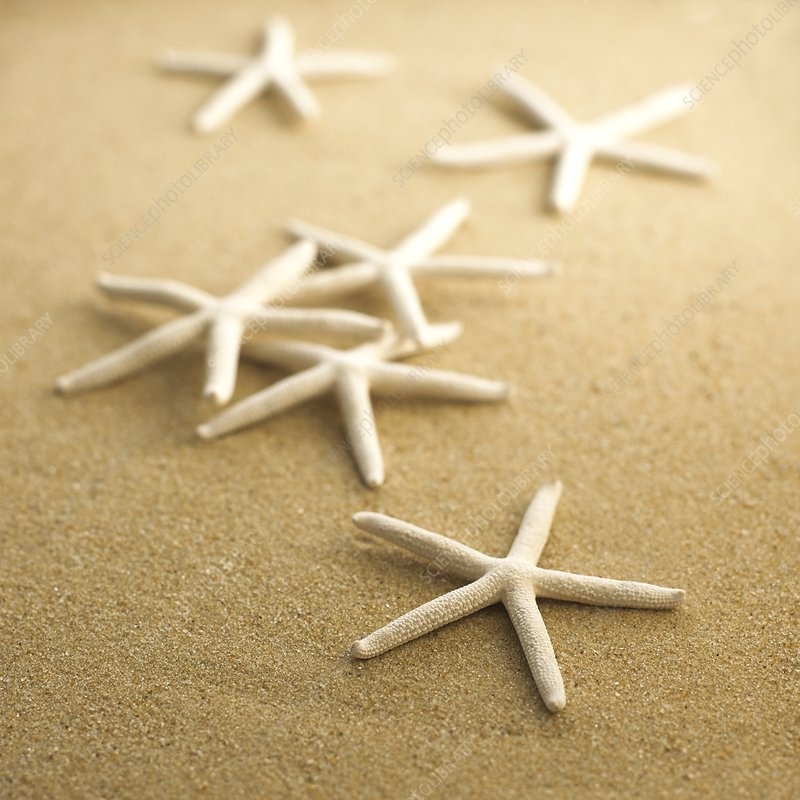 Finger starfish on sand