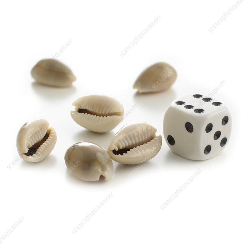 Money cowry sea shells and dice