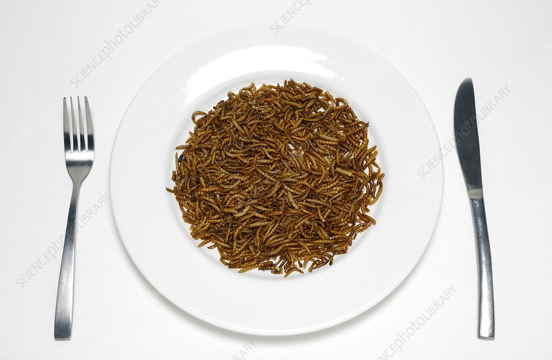 Plate of mealworm