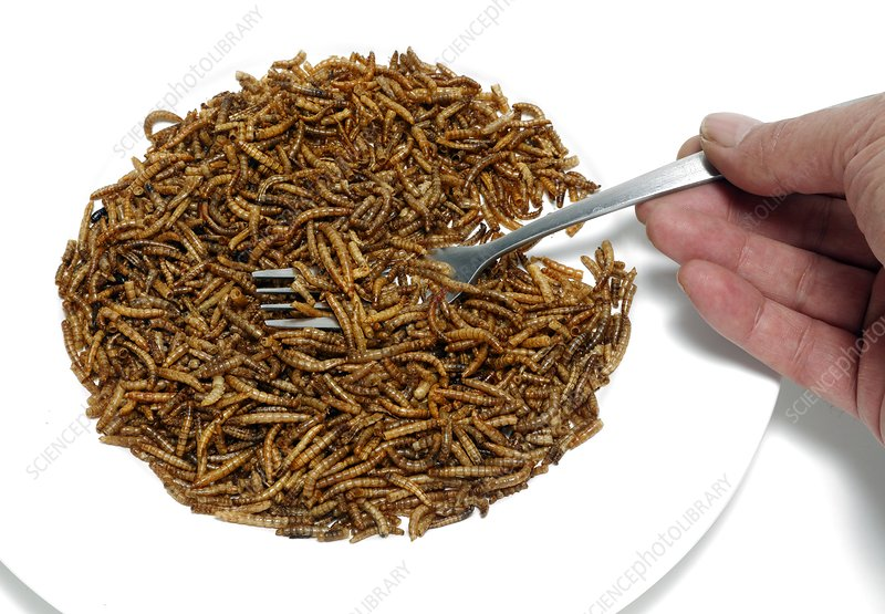 Fork with plate of mealworm