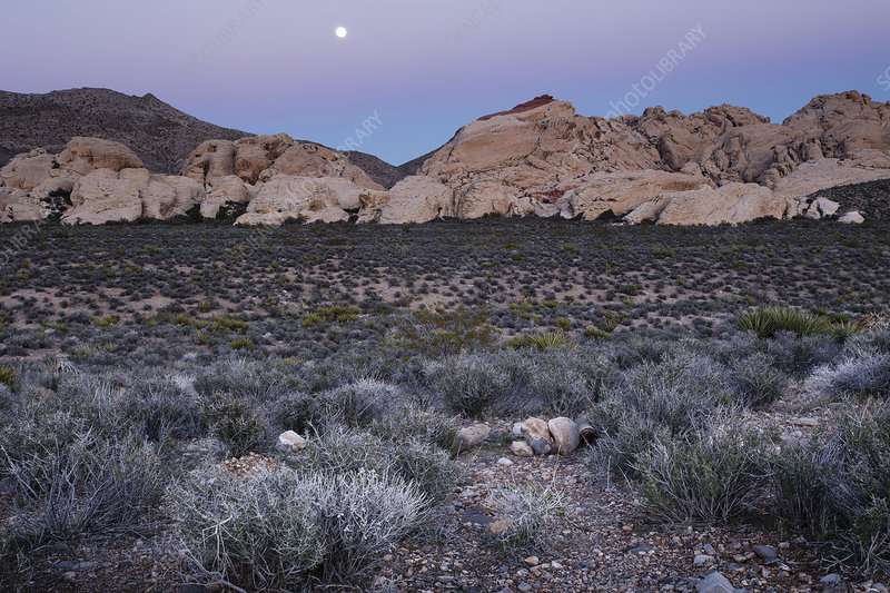 The moon rising in Red Rock Canyon, Nevad