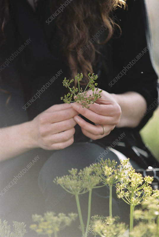 Woman picking wild flowers
