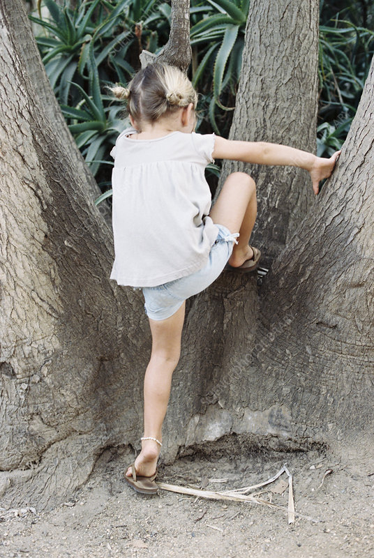 A young blond haired girl climbing a tree