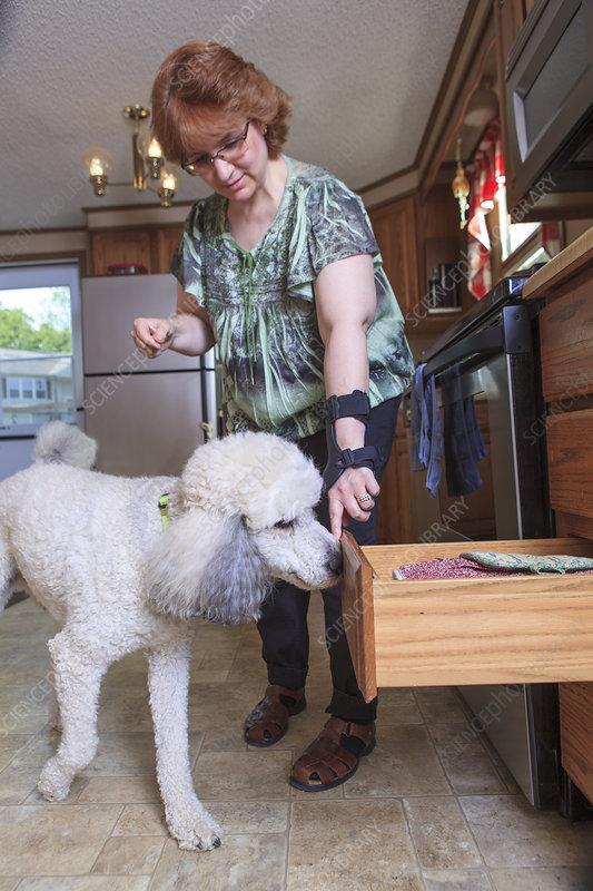 Dog closing a kitchen drawer