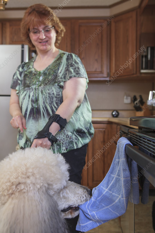 Dog picking up a dish towel