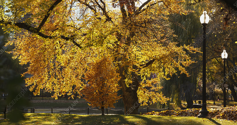 Boston Public Garden in the fall
