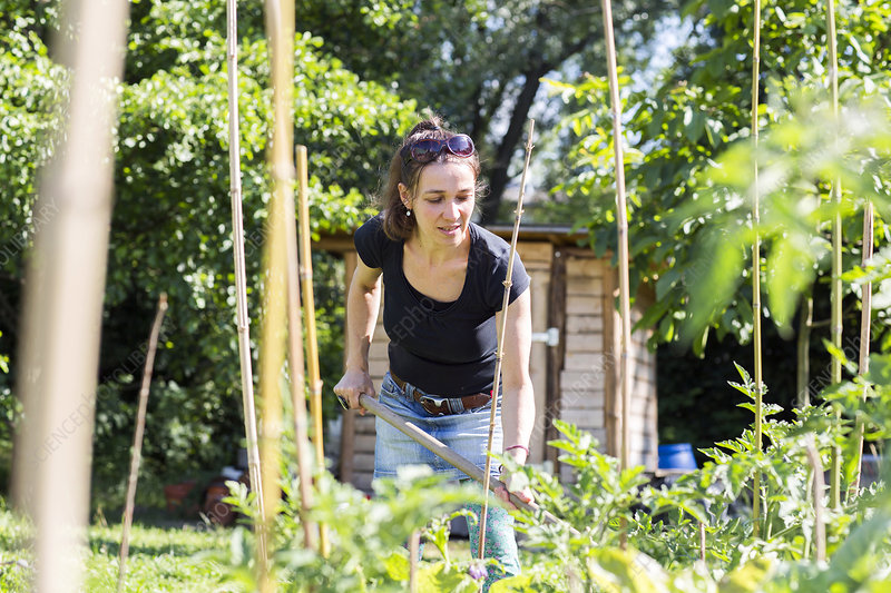 Mid adult woman working in the garden