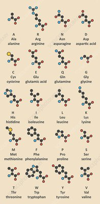 Amino acids molecules