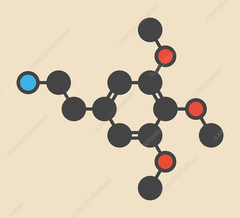 Mescaline peyote psychedelic molecule